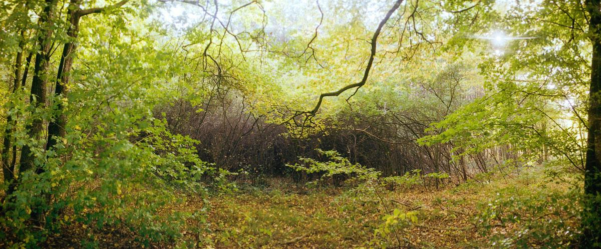 Der Wald Hainich in Thüringen