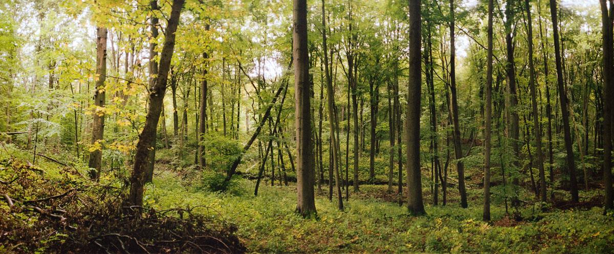 Der Buchenwald Hainich in Thüringen