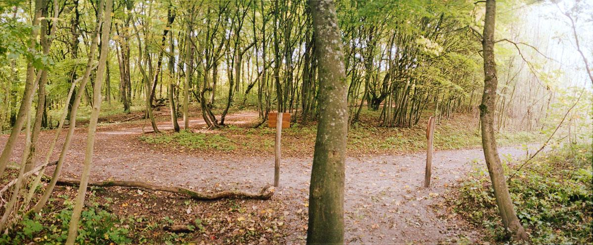 Wege im Nationalpark Hainich in Thüringen