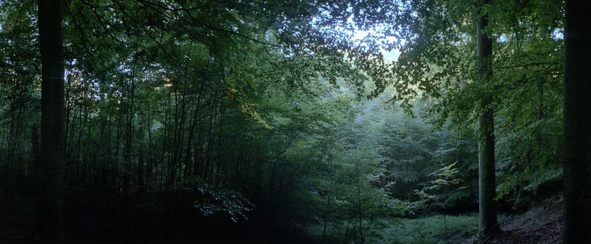 Buchenwald mit Buchen am Kermeter im Nationalpark und Mittelgebirge Eifel