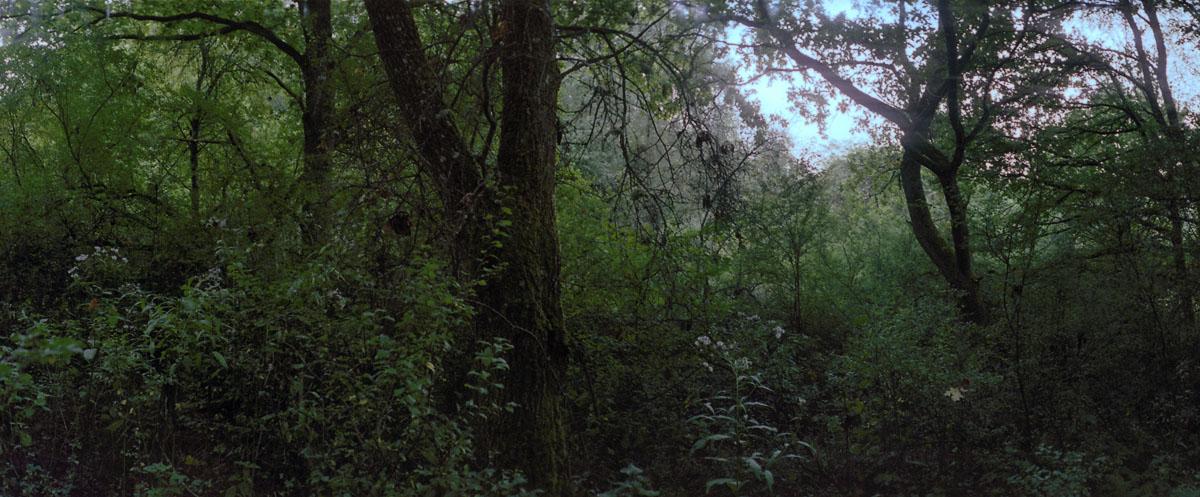 Wald am Vogelsang im Nationalpark und Mittelgebirge Eifel