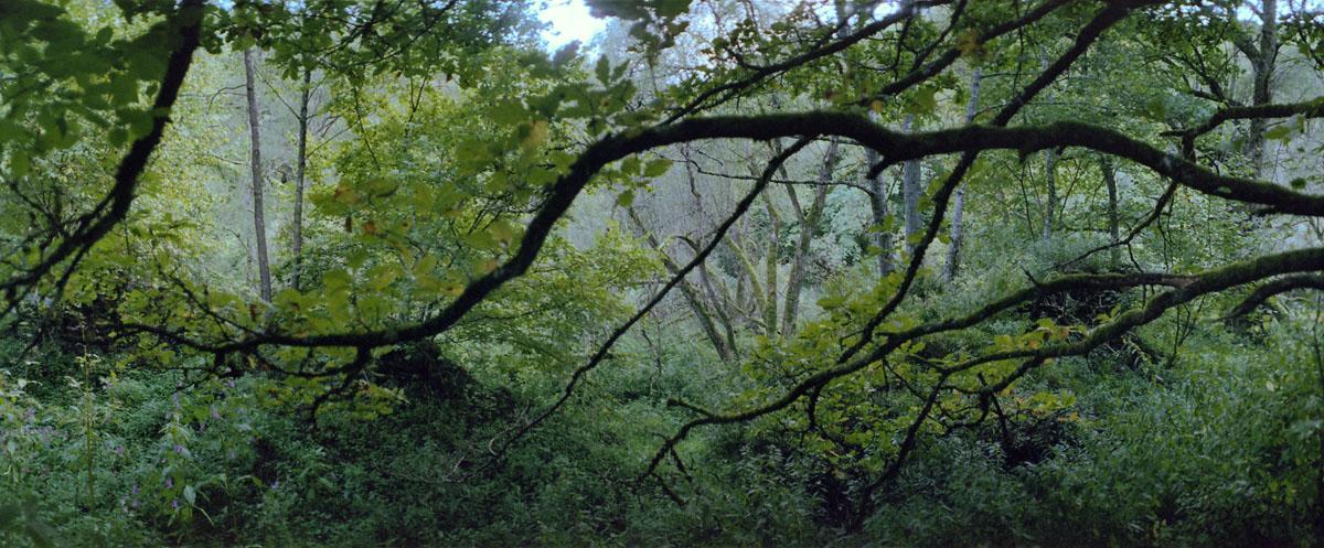 Laubwald an der Urft im Nationalpark und Mittelgebirge Eifel