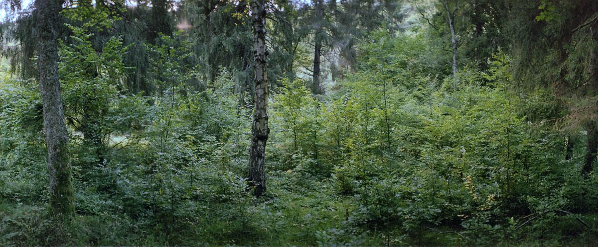 Wald im Nationalpark und Mittelgebirge Eifel