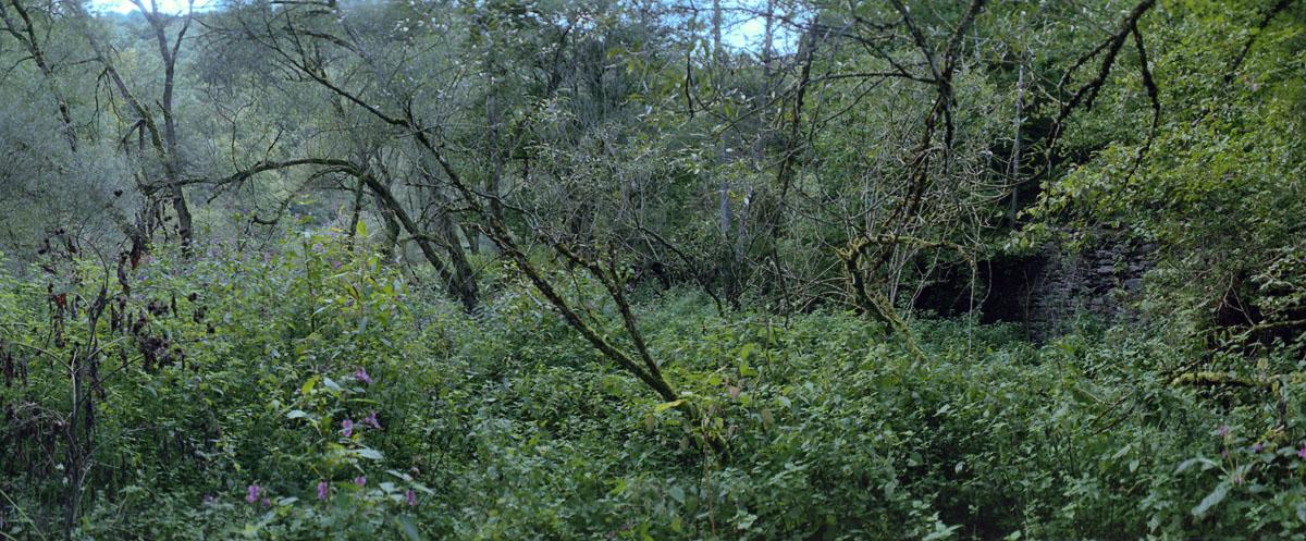 Wald an der Urft im Nationalpark und Mittelgebirge Eifel