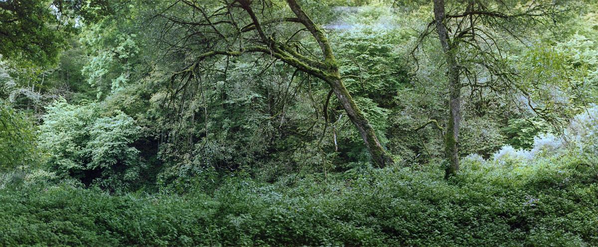 Laubwald am Fluss Urft im Nationalpark und Mittelgebirge Eifel