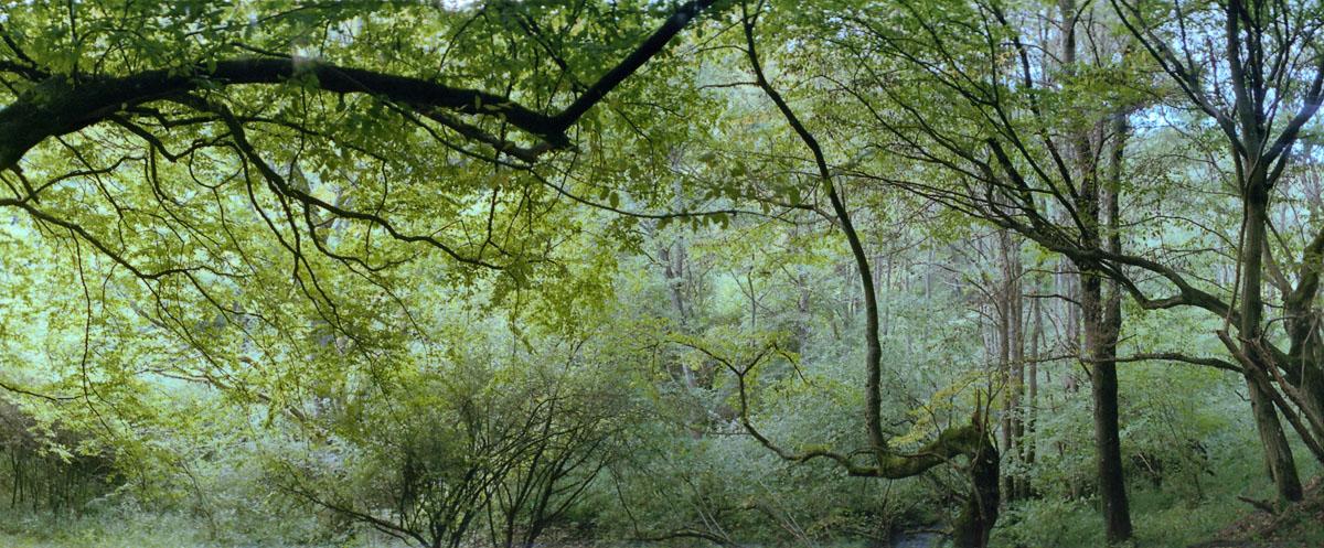 Laubwald im Nationalpark und Mittelgebirge Eifel