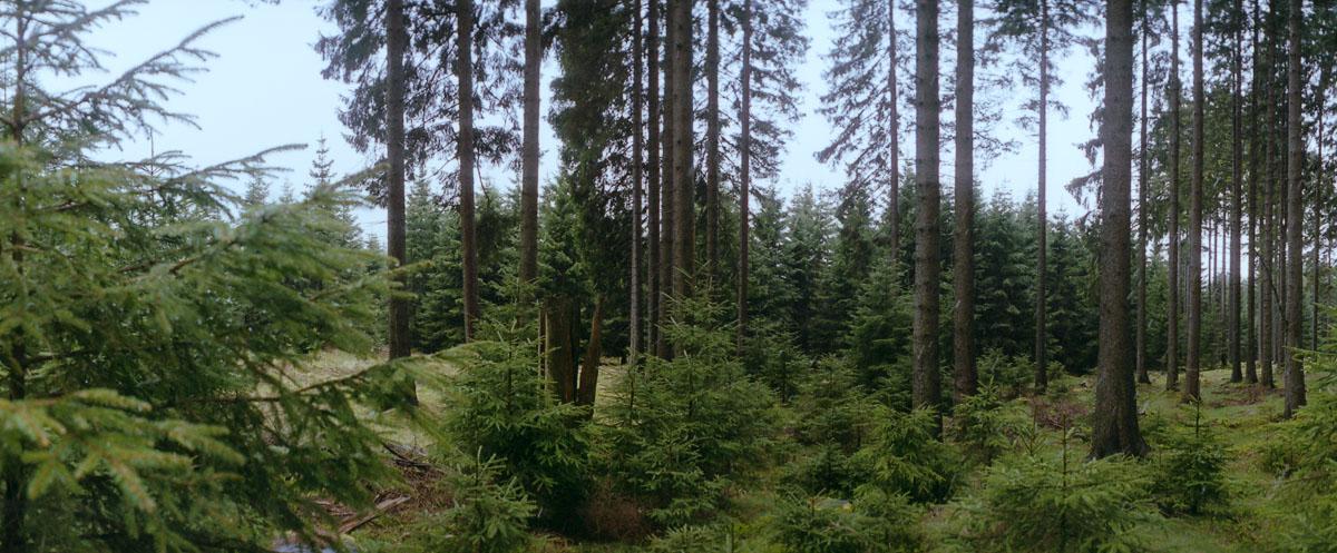 Regenschauer im Wald im Nationalpark Harz