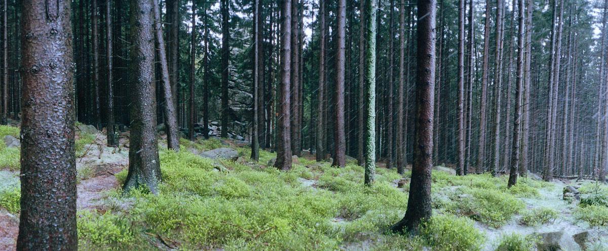 Regen im Nationalpark Harz an der Feuersteinklippe