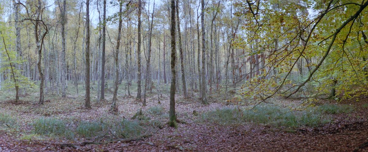Buchen, Erlen und Birken im Weltnaturerbe Buchenwald Grumsin