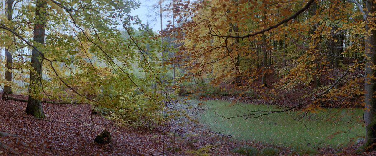 Moor und Buchen im Weltnaturerbe Buchenwald Grumsin im Herbst