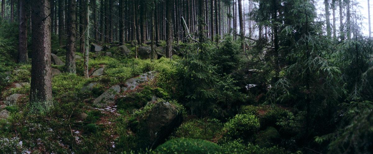 Der Wald im Mittelgebirge Nationalpark Harz