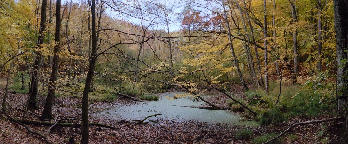 Moor mit Buchen und Birken im Weltnaturerbe Buchenwald Grumsin im Herbst