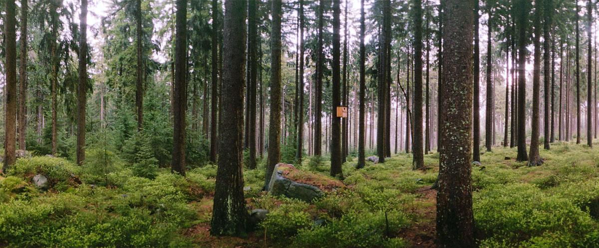 Mauseklippe im Sonnenuntergang im Nationalpark Harz
