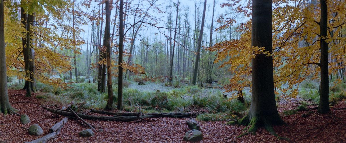 Moor mit Buchen und Erlen im Weltnaturerbe Buchenwald Grumsin im Herbst