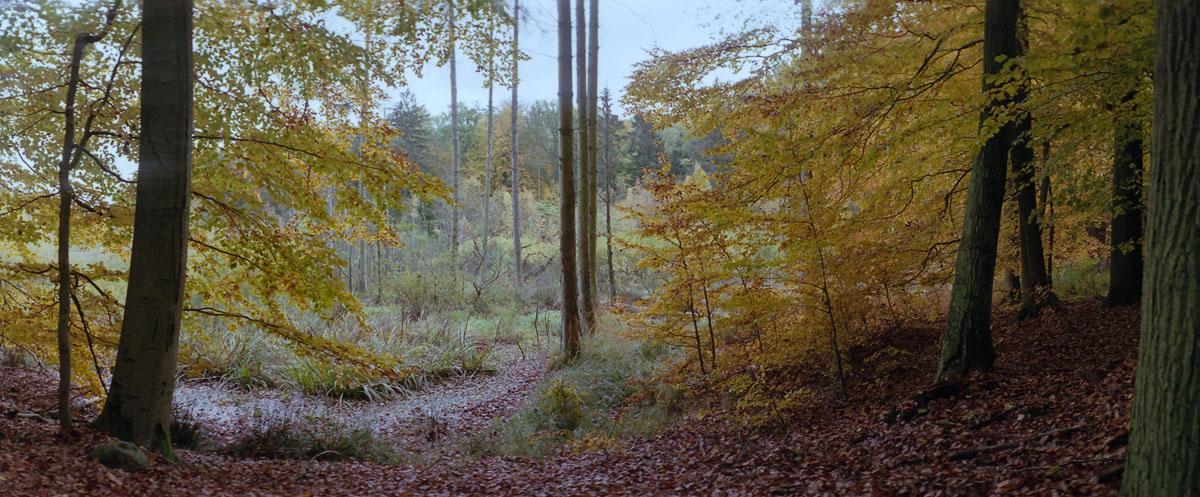 Moor mit Buchen im Weltnaturerbe Buchenwald Grumsin im Herbst