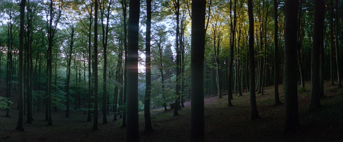 Sonnenaufgang mit Buchen im Buchenwald und Nationalpark Jasmund auf Rügen