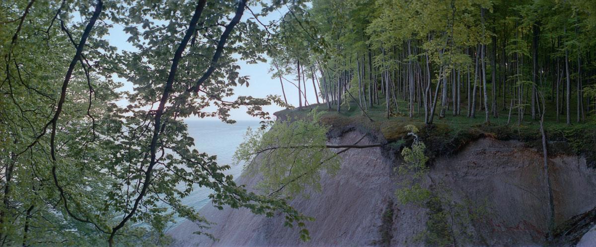 Kreidefelsen mit Buchen im Buchenwald und Nationalpark Jasmund auf Rügen an der Ostsee