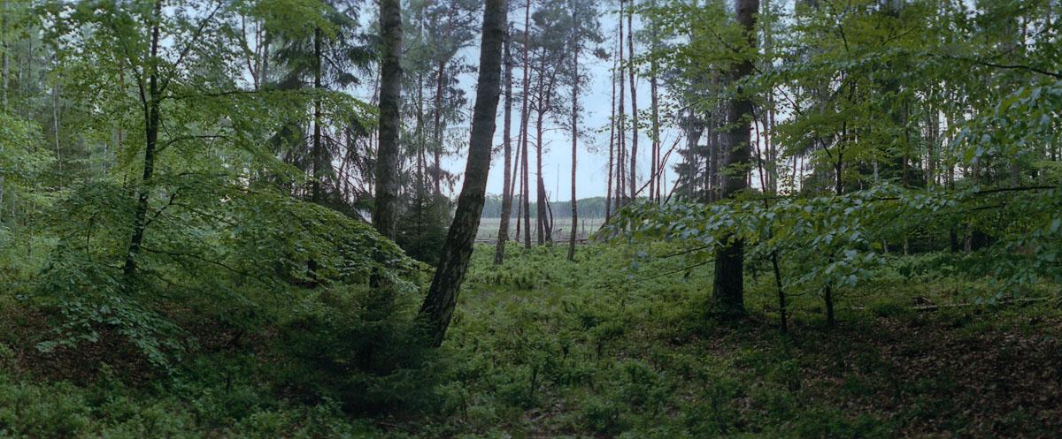 Wald mit Birken, Buchen und Kiefern im Weltnaturerbe Serrahn im Müritz Nationalpark
