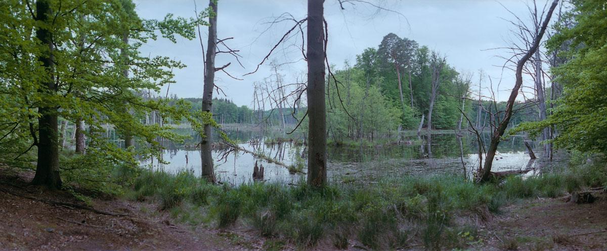 Buchenwald am Schweingartensee im Weltnaturerbe Serrahn im Müritz Nationalpark