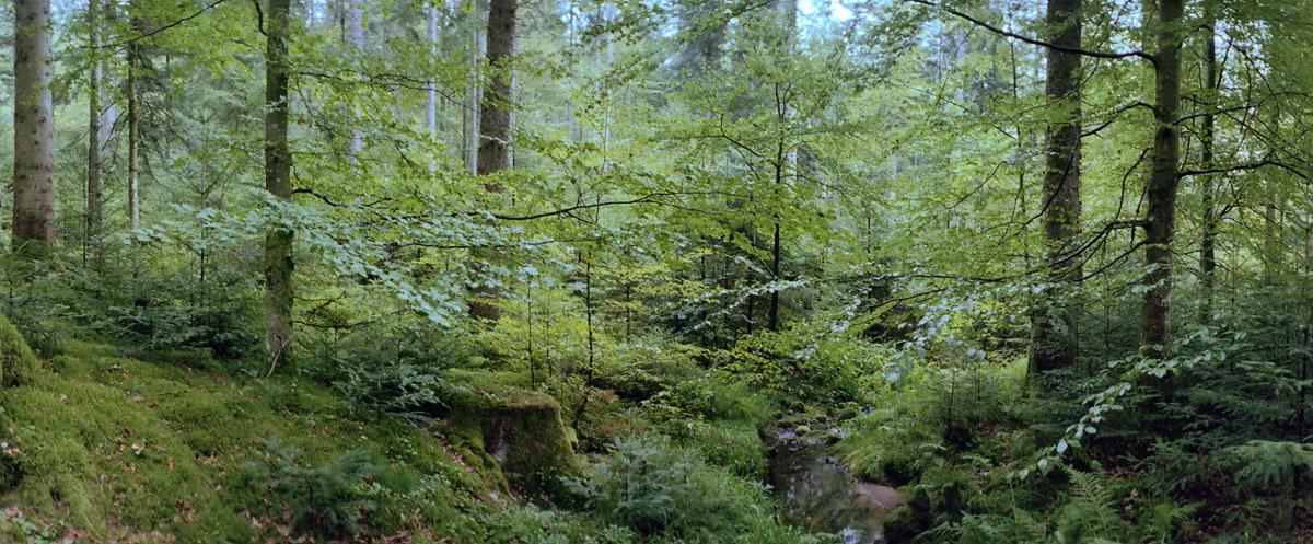 Wald mit Fichten, Buchen und Tannen im Mittelgebirge Schwarzwald, Bild mit einer Horizon 202 aus Russland
