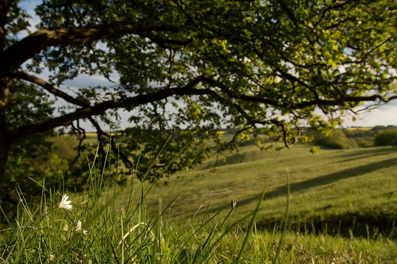 Sternmiere am Waldrand mit Blick über die Felder