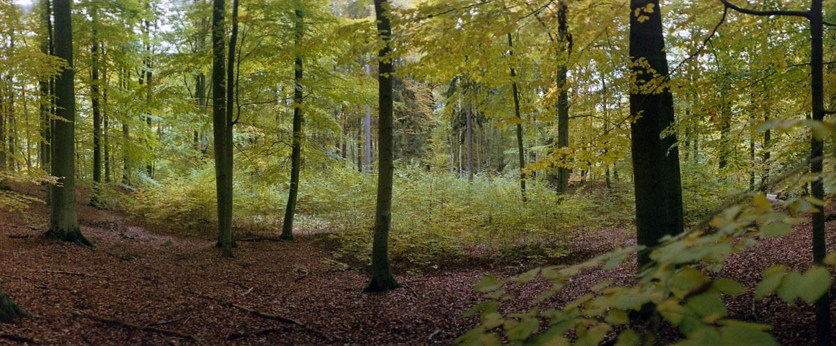 Buchen im Herbst im Weltnaturerbe Buchenwald Grumsin, Fotos mit der KMZ Horizon 202