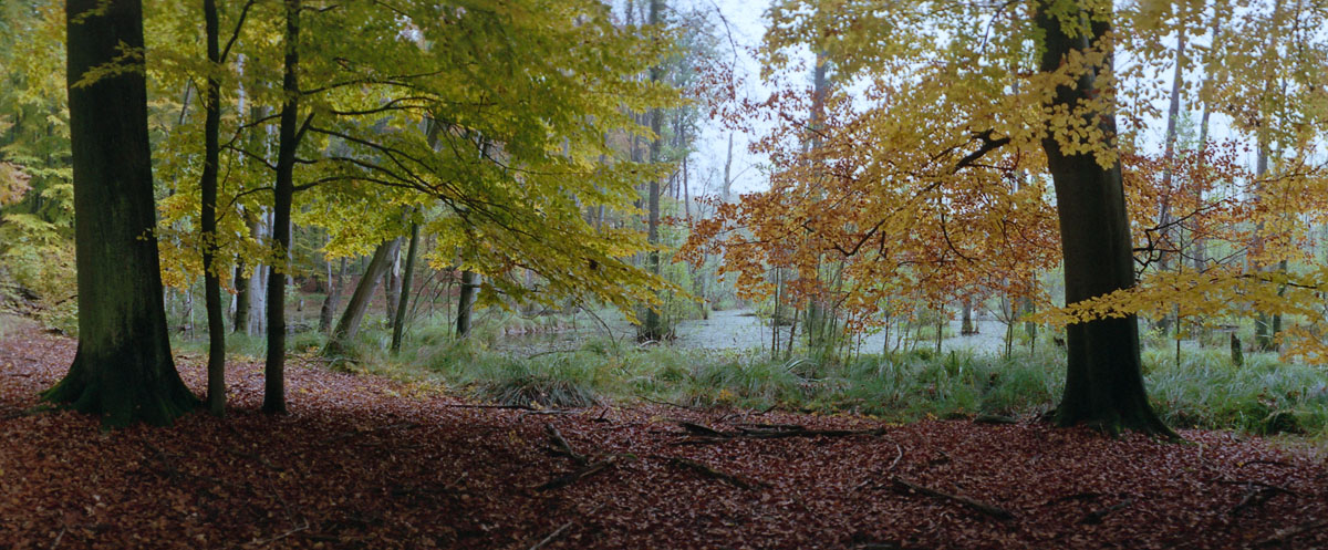 Moor mit Buchen im Weltnaturerbe Buchenwald Grumsin im Herbst, Panorama mit einer Horizon 202 Kamera