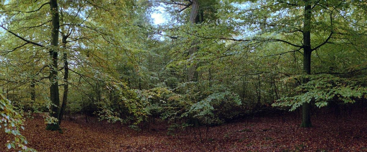 Buchenwald mit Buchen im Nationalpark Kellerwald-Edersee im Herbst, Bilder analog fotografiert mit einer Horizon 202