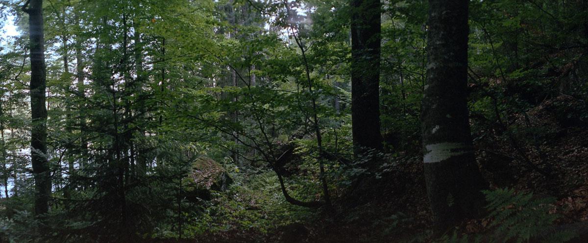 Mischwald mit Fichten, Tannen und Buchen im Nationalpark und Mittelgebirge Bayerischer Wald, Panorama mit einer Horizon 202 auf 35mm Film