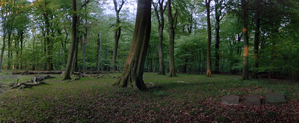 Buchen und Gräber im Buchenwald und Nationalpark Jasmund auf Rügen, Aufnahme mit der Horizon 202