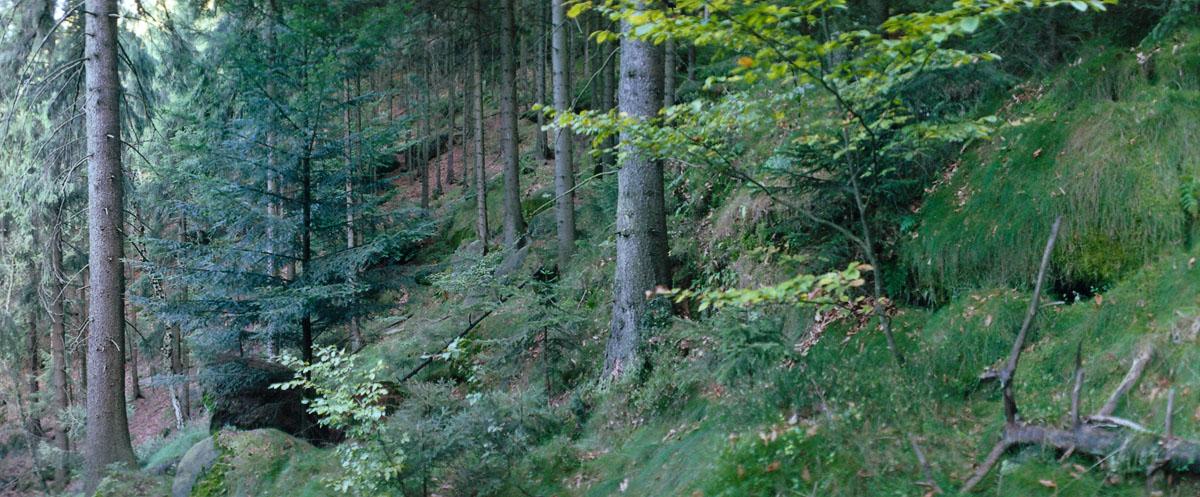 Wald im Nationalpark Sächsische Schweiz im Elbsandsteingebirge