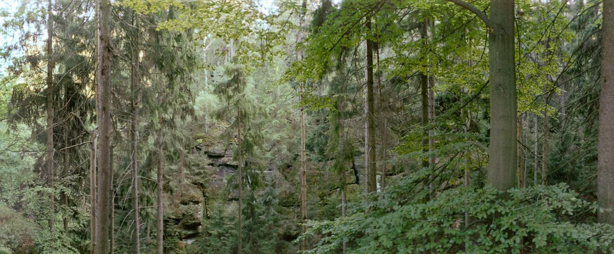 Mischwald im Nationalpark Sächsische Schweiz im Elbsandsteingebirge