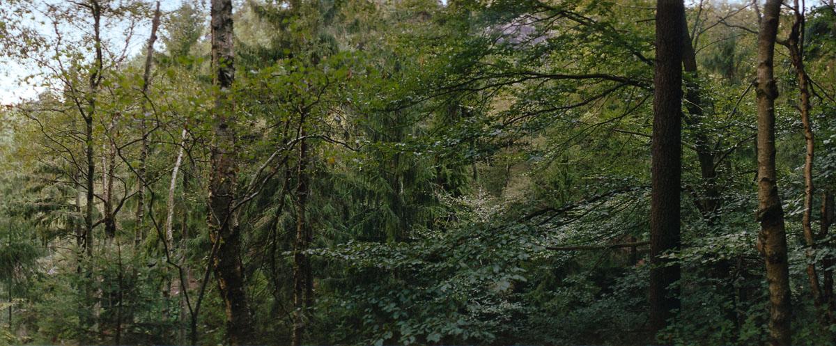 Mischwald mit Birken, Buchen und Fichten im Nationalpark Sächsische Schweiz im Elbsandsteingebirge