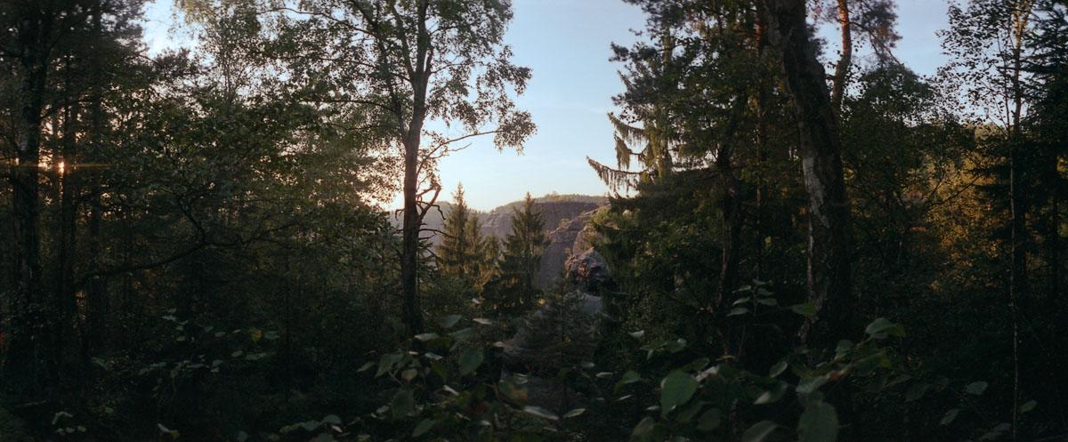 Wald mit Sonnenuntergang im Nationalpark Sächsische Schweiz im Elbsandsteingebirge